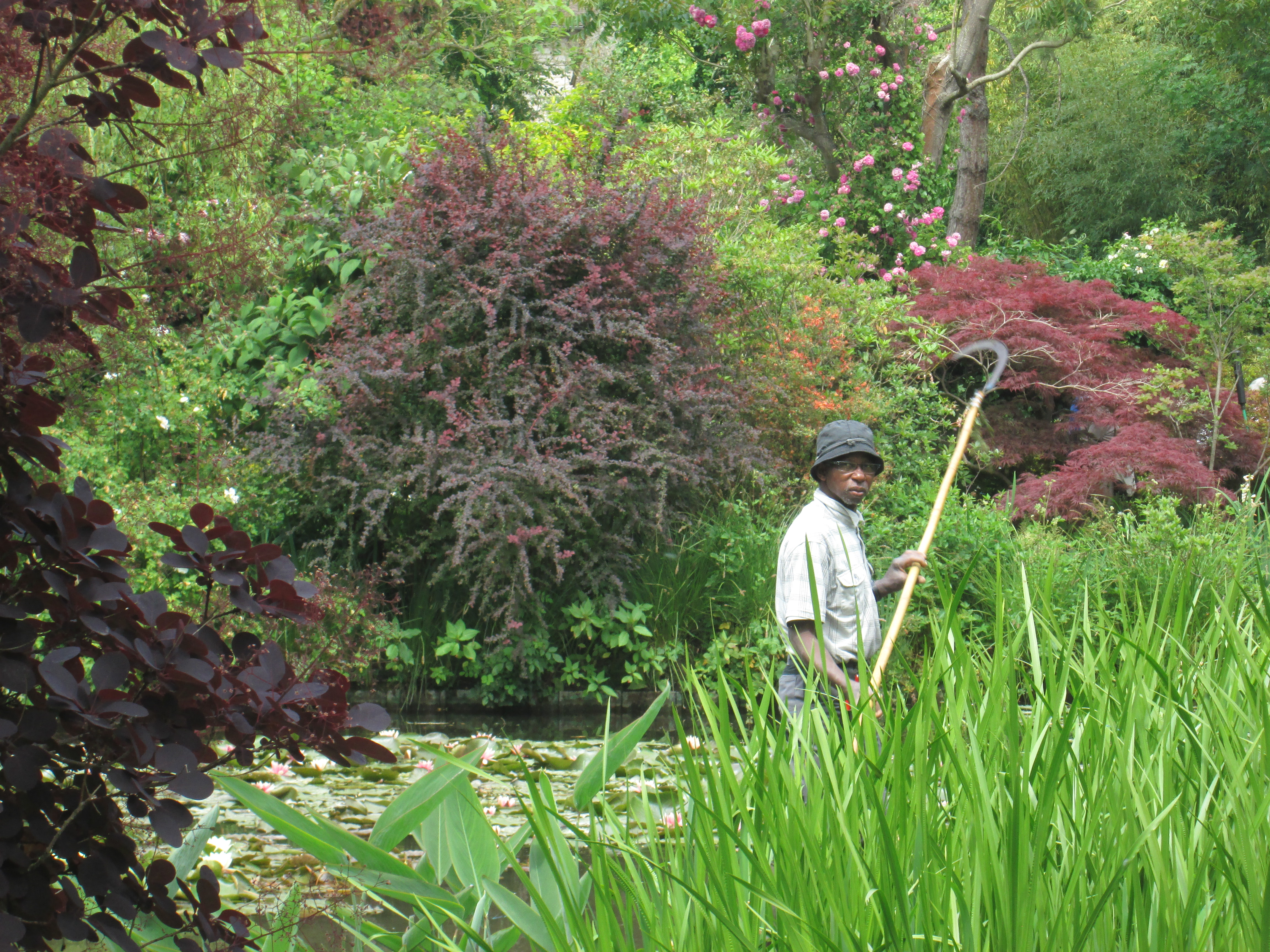 Cleaning the Lily Pond at Monet's house